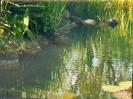 Der erste eigene Teich